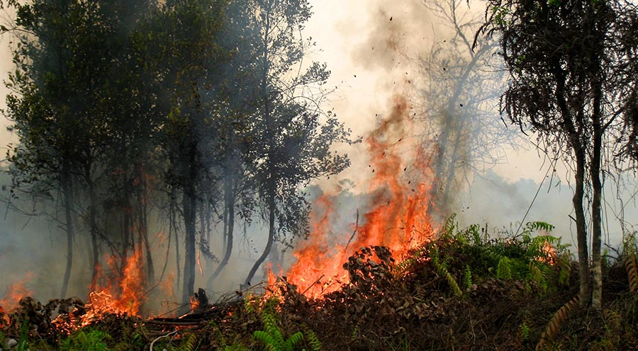 2015 Indonesian Fires