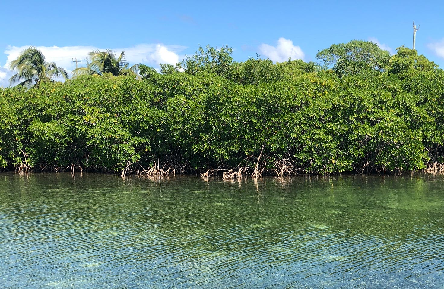 Photo of a mangrove swamp