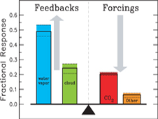 Various atmospheric components differ in their contributions to the greenhouse effect, some through feedbacks and some through forcings. Without carbon dioxide and other non-condensing greenhouse gases, water vapor and clouds would be unable to provide the feedback mechanisms that amplify the greenhouse effect.